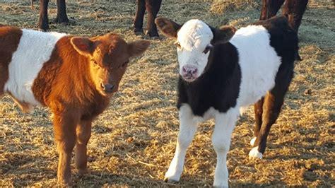 Yogurt Barn Ramona by Md Ranch West Pet Service Ramona California