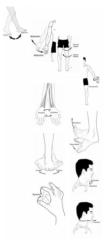 Anatomical Terms Angle Flexion Bending Joint Movement