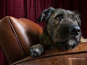 Pin by Jeff Miller on Wolfhounds | Pinterest