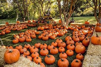 Pumpkin Patch Pumpkins Fall Wallpapers Scene Park