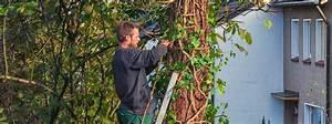 Nadelbäume Selber Bauen : einen baum selber f llen wann darf man das ratgeber magazin tipps von ~ Whattoseeinmadrid.com Haus und Dekorationen