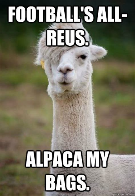 Alpaca Meme - football s all reus alpaca my bags alpaca hipster quickmeme