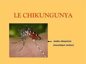 Qu Est Ce Qui Attire Les Moustiques : le chikungunya aedes albopictus moustique vecteur ppt ~ Voncanada.com Idées de Décoration