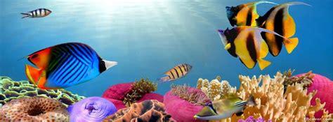 tropical fish facebook cover photo fbcovercom