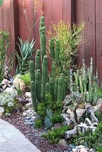 lovely cactus garden design How To Use Cacti In Outdoor Decor   outdoortheme.com