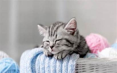 Kitten Sleepy Wallpapers Sleeping Cats 1080p Cat