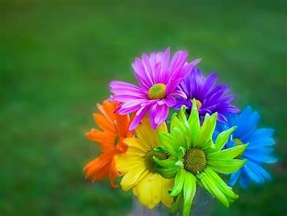 Flowers Flower Power Perfect Choosing Tips