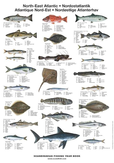 north east atlantic fish la tene maps