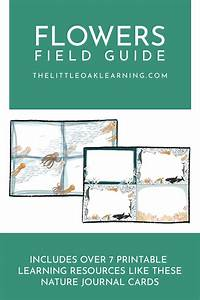 Sea Creature Field Guide  Learning Resources For Kids