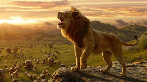 simba   lion king  wallpapers hd wallpapers id