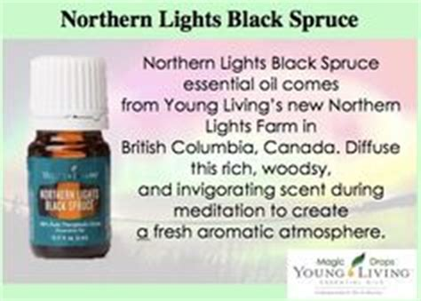 northern lights black spruce essential oil 1000 images about aceite northern lights black spruce on