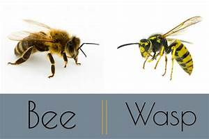 """Bee"" Safe This Fall By Steering Clear Of Honey Bees And ..."
