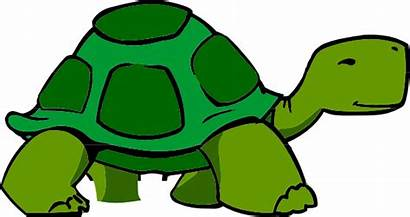 Turtle Clip Clipart Vector Clker Turtles Drawing