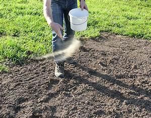 Quand Semer Du Gazon : le jardin dans le sceptre d 39 ottokar jardiner avec jean paul ~ Dailycaller-alerts.com Idées de Décoration