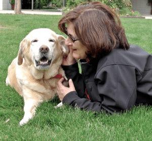 shelter dogs   find   animal shelters dog