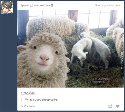 Sheep Memes - image gallery sheep meme