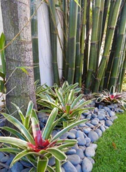 garden borders tropical landscaping ideas  ideas
