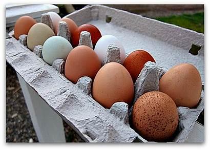 Eggs Farm Easter Fresh Spencer Farmers Dozen