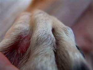 Y2IwO yeast infection between dog s toes