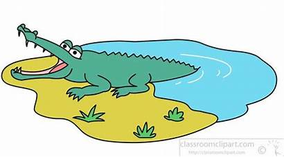 Crocodile Water Clipart Jumping Alligator Animals Classroom