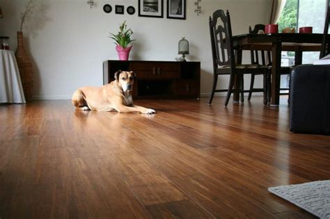 pet friendly hardwood floors 17 best images about pet friendly flooring on pinterest
