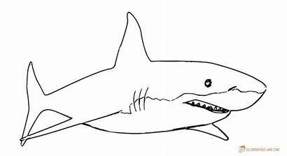 Shark Coloring Clipart Traceable Sheet Printable Simple