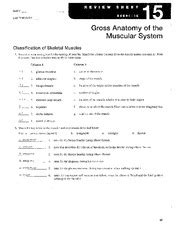 a p lab ex 15 name lab time date gross anatomy of the muscular system classification of