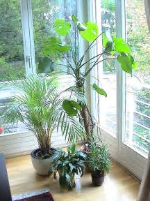 Best Air Purifying Plants Indoor
