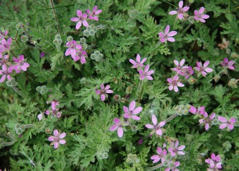 Weeds with Purple Flowers