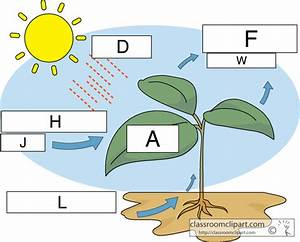 35 Label Photosynthesis