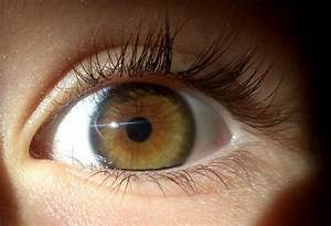50 best images about Heterochromia on Pinterest | Eyes ...