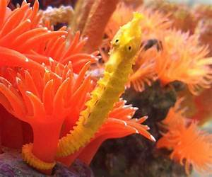 Girl Rescues Orange Seahorse Mistaken For A Cheeto, The ...