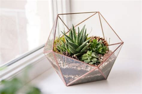 15 great plants for the terrarium in your home or office