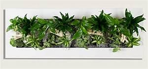 Pflanzen An Der Wand : flowerwall echtes lebendes pflanzenbild ~ Articles-book.com Haus und Dekorationen