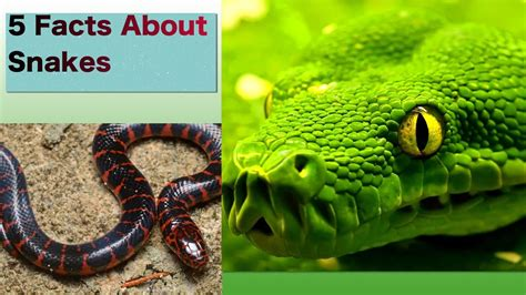 5 Facts About Snakes, For Kids - YouTube
