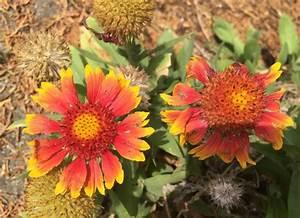 Blumen Im Juli : blumen im juli a collection of gardening ideas to try ~ Lizthompson.info Haus und Dekorationen