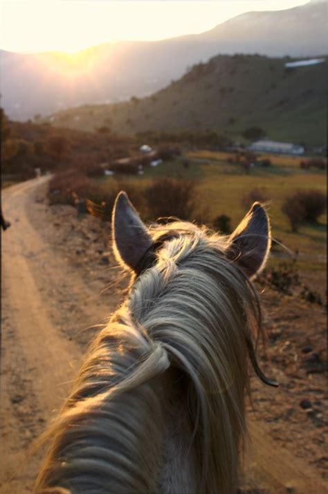 equestrian life | Tumblr