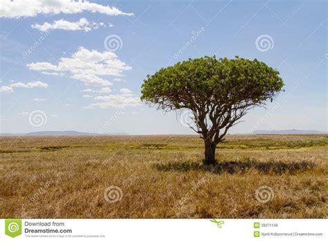 Tree In Serengeti Stock Photo Image 39271148