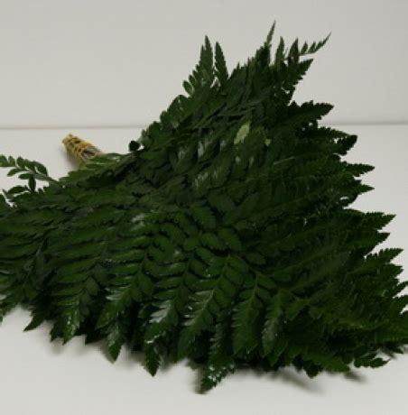 Zaļš pušķu noformējums - Paparde Leder / Nopirkt ziedus ...