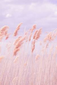 dreamy pastel grass pink poppy photography is all