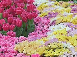 Natural Flower Wallpaper