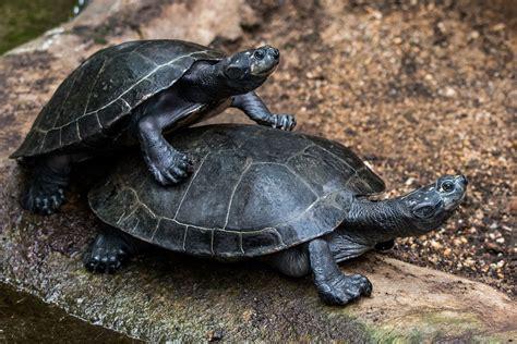 Images Of Turtles Turtle Turtles Water 183 Free Photo On Pixabay