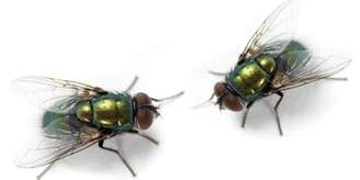 rid  flies   house tips information