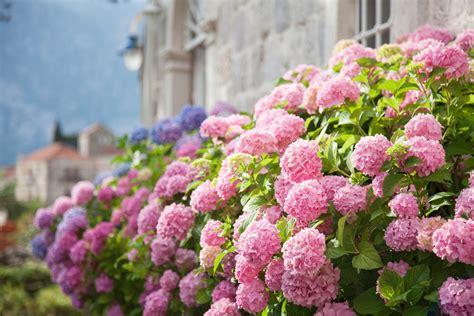 garten für faule 9 wunderbare pflanzen f 220 r faule g 196 rtner willkommen in franks kleinem garten