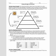 Trophic Levels Worksheet The Best Worksheets Image Collection  Download And Share Worksheets