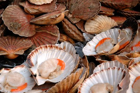 what are scallops it s all about technique pan searing scallops the man who ate south jersey