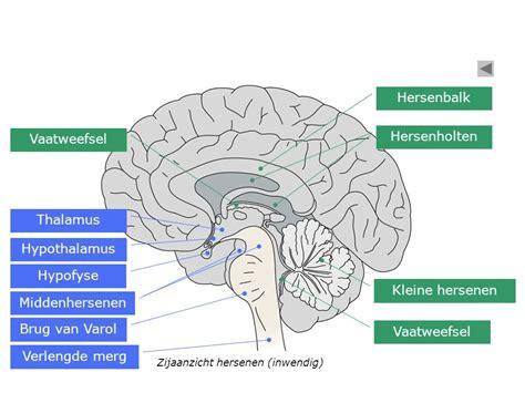 Ontsteking kleine hersenen