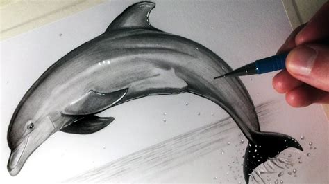 draw  dolphin youtube