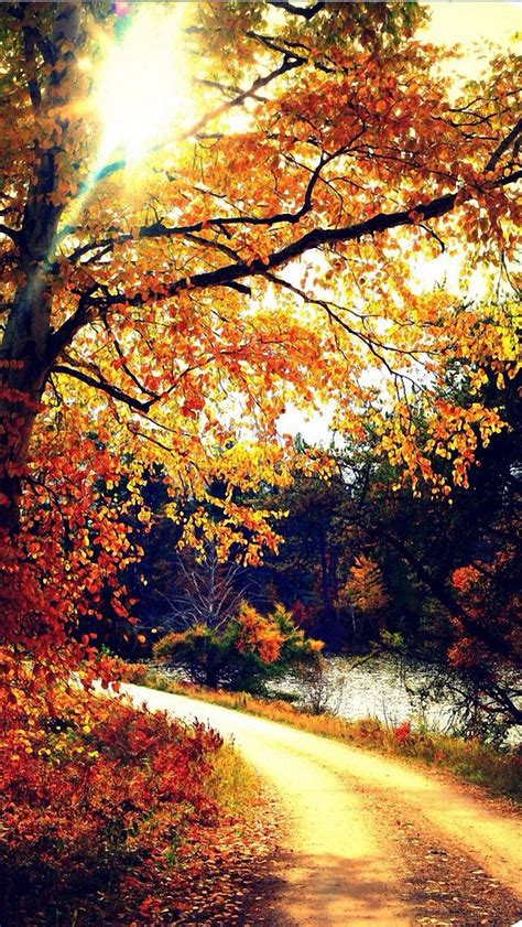 Fall Themed Wallpaper Iphone by Autumn Iphone 5 Wallpaper Iphone Wallpaper