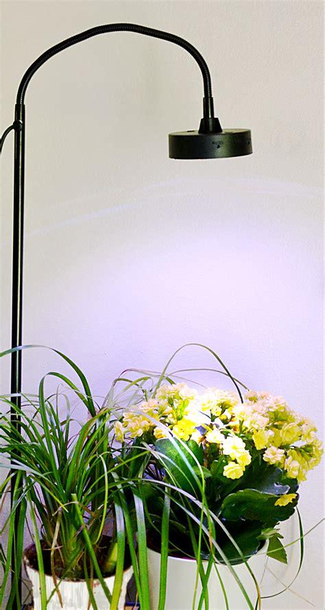 le led pour plante une le pour vos plantes jardile jardinage int 233 rieur fr le